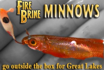 Fire-Brine-minnows-blog