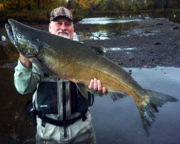 New york s salmon river expected to see salmon this week for Best bait for salmon fishing in the river