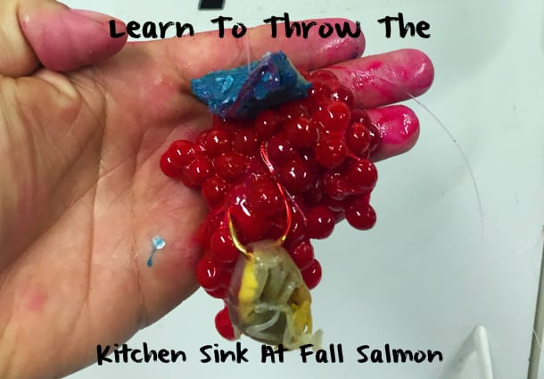 learn to to throw the kitchen sink at salmon pautzke bait co