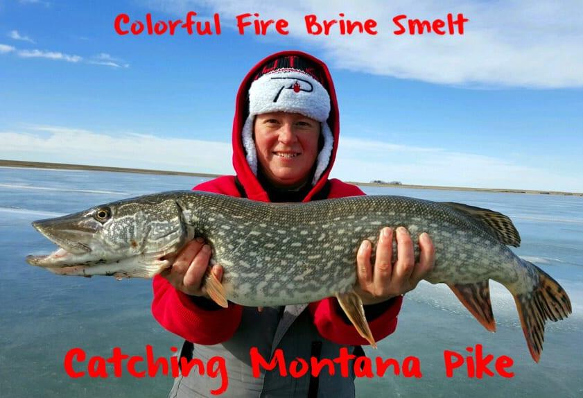 MontanaPikeSmeltLead