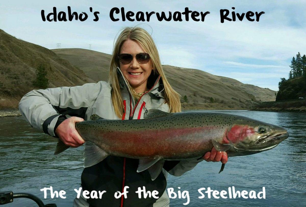 Idaho s clearwater river the year of the big steelhead for Salmon fishing in idaho