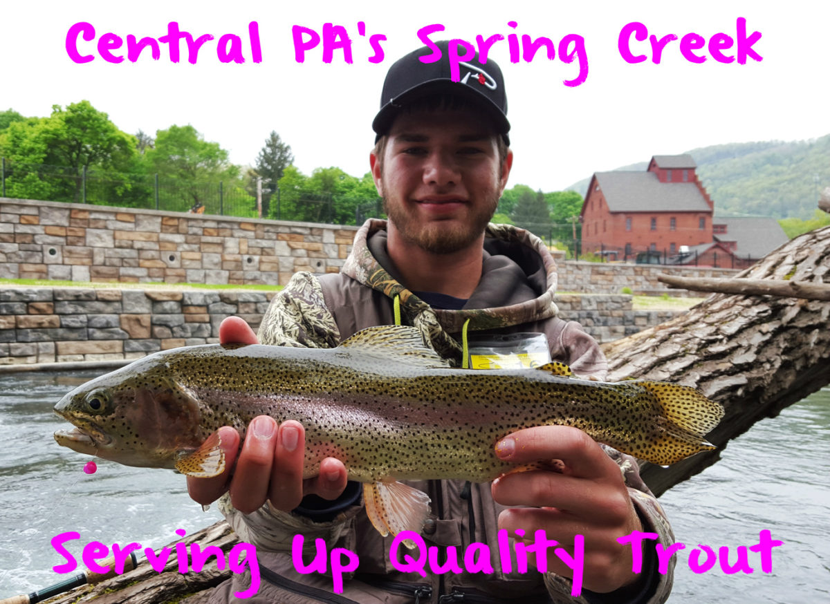 Central pa s spring creek serving up quality trout for Fishing in pennsylvania