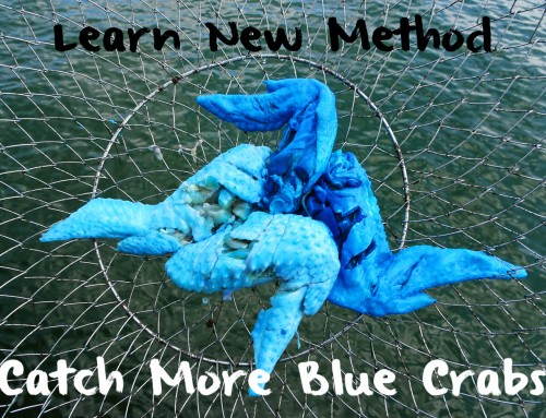 Learn New Method, Catch More Blue Crabs