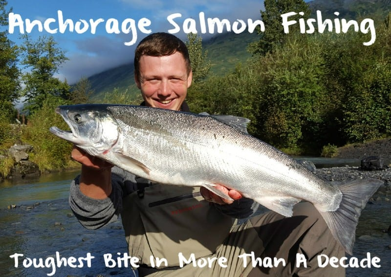 Anchorage Salmon Fishing: Toughest in More Than A Decade ... Fish X Anchorage