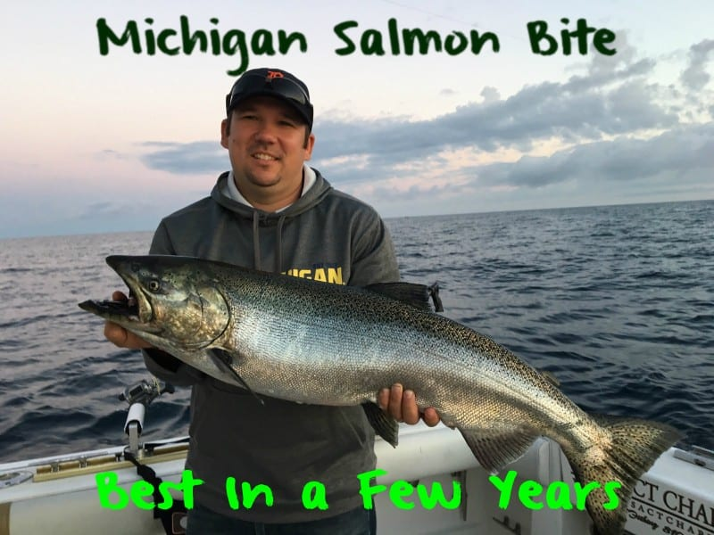 MichiganSalmonLead