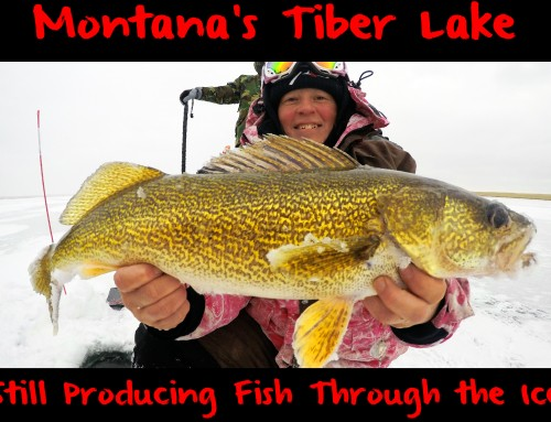 Montana's Tiber Lake Still Producing Fish Through the Ice