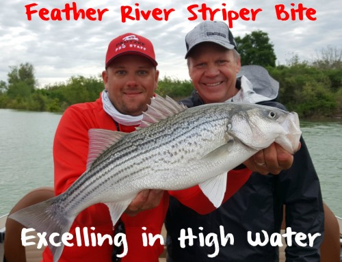 Feather River Striper Bite Excelling in High Water