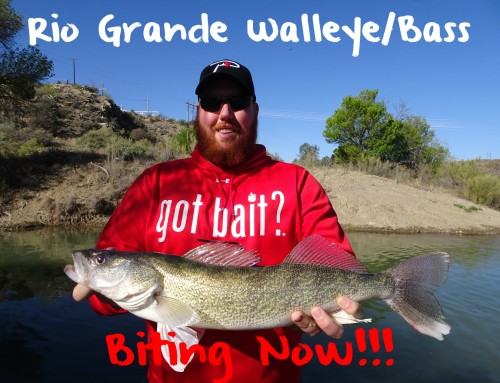 Rio Grande Bass & Walleye Biting Now!