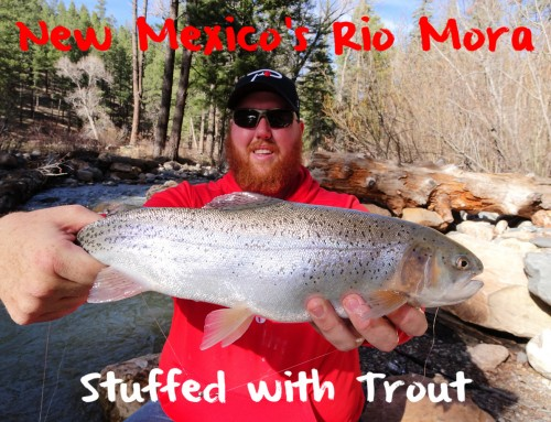 New Mexico's Rio Mora Stuffed with Trout