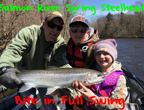 Salmon River Spring Steelhead Bite in Full Swing