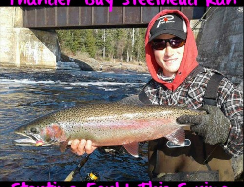Thunder Bay Steelhead Run Starting Early This Spring