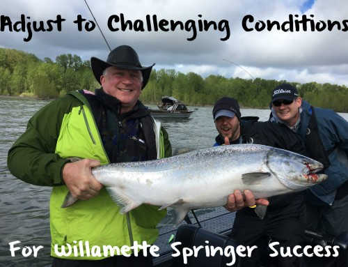 Adjust to Challenging Conditions for Willamette Spring Chinook Success