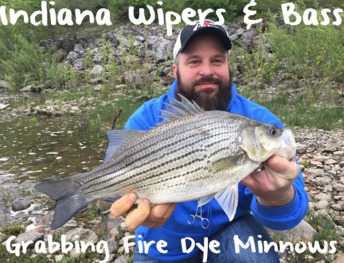 Indiana Wipers & Bass Hammering Fire Dye Minnows