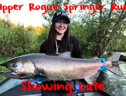 Upper Rogue Springers Showing Late