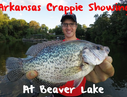 Arkansas Crappie Showing on Beaver Lake