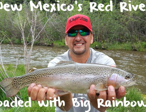 New Mexico's Red River Loaded with Big Rainbows