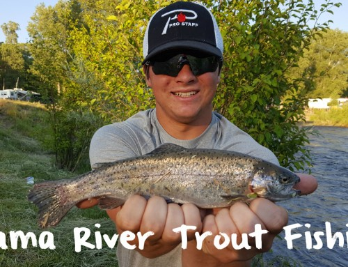Chama River Fishing Well For Trout