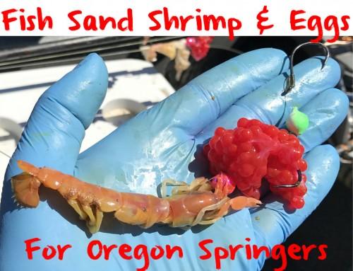 Learn to Fish Sand Shrimp & Eggs For Oregon Springers