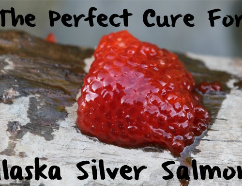 The Perfect Cure For Alaska Silver Salmon