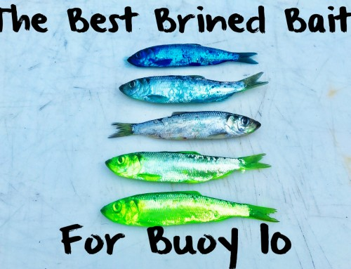 The Best Brined Baits for Buoy 10