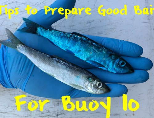 Tips to Prepare Good Bait For Buoy 10