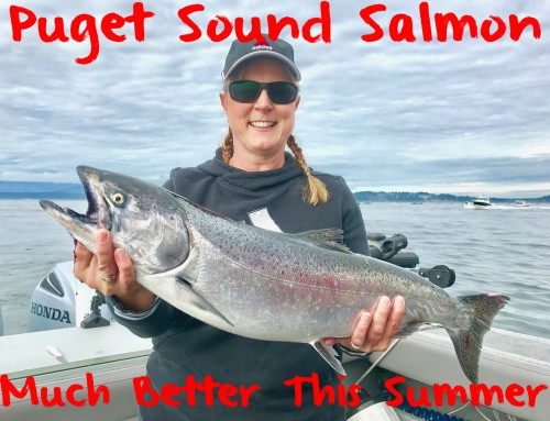 Puget Sound Salmon Much Better This Summer