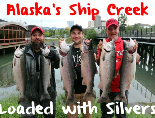 Alaska's Ship Creek Loaded with Silvers