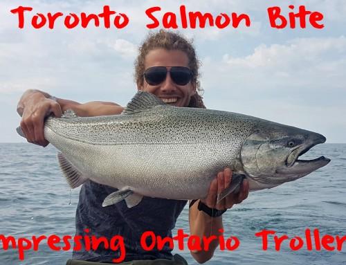 Toronto Salmon Bite Impressing Ontario Trollers