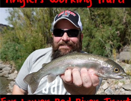 Anglers Working Hard for Lower Red River Trout