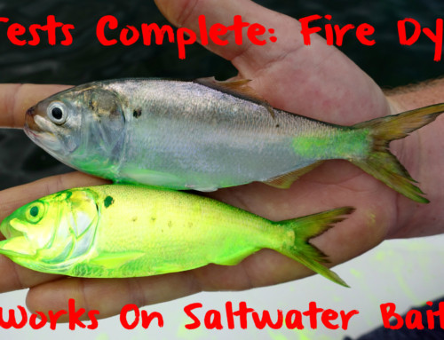 Test Complete: Fire Dye Works On Saltwater Baits
