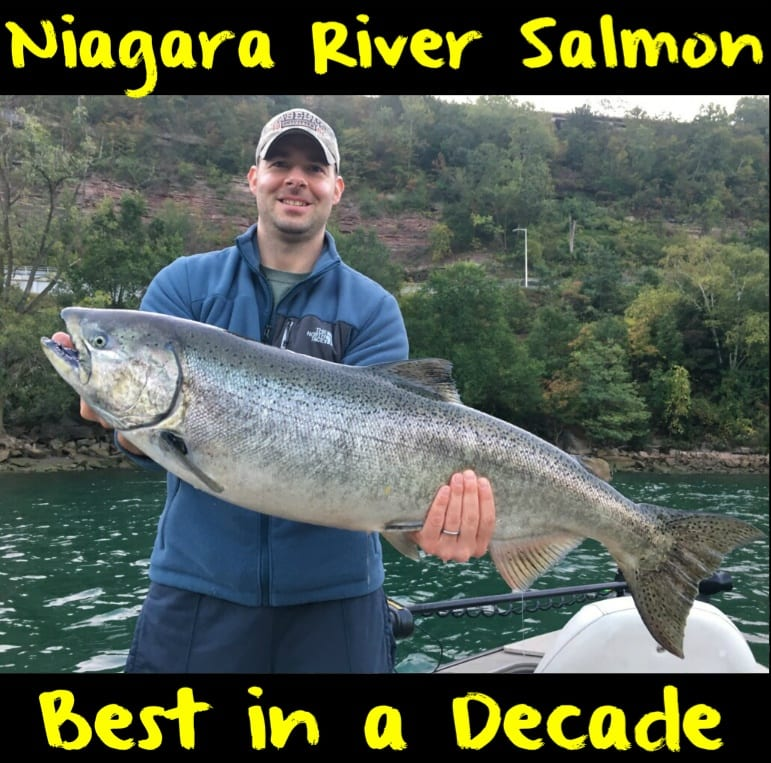 Niagara river salmon best in a decade pautzke bait co for Best bait for salmon fishing in the river
