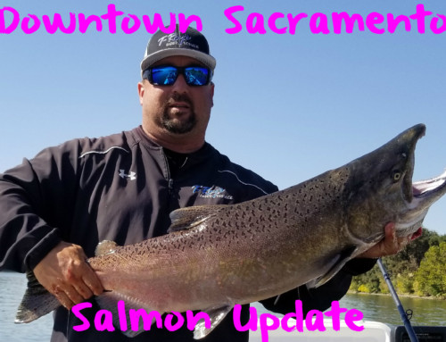 Downtown Sacramento Salmon Update