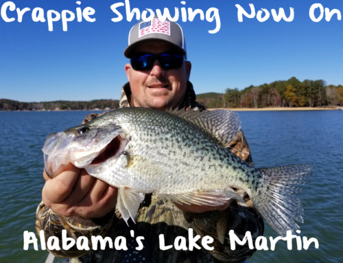 Crappie Showing Now On Alabama's Lake Martin