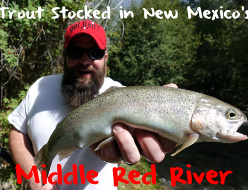 Trout Stocked In New Mexico's Middle Red River