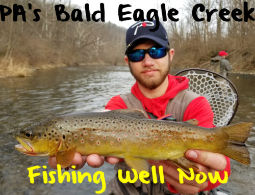 PA's Bald Eagle Creek Fishing Well Now