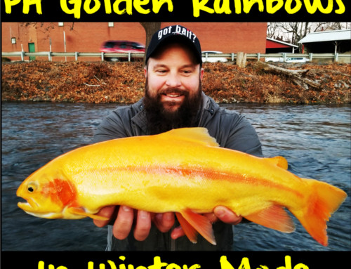 Winter Bite for PA Golden Rainbows