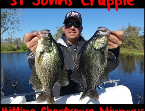 St Johns Crappie Hitting Chartreuse Minnows