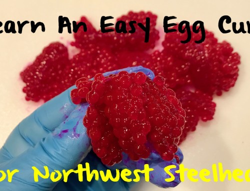 Learn An Easy Egg Cure For Northwest Steelhead