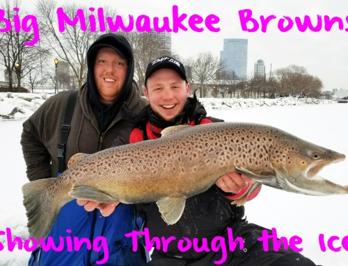 Big Milwaukee Browns Showing Through the Ice