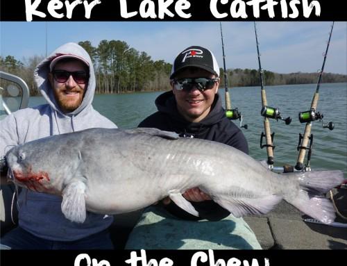 Kerr Lake Cats Starting to Chew