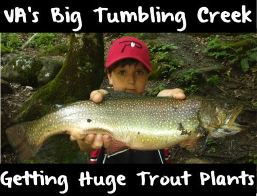 VA's Big Tumbling Creek Getting Huge Trout Plants