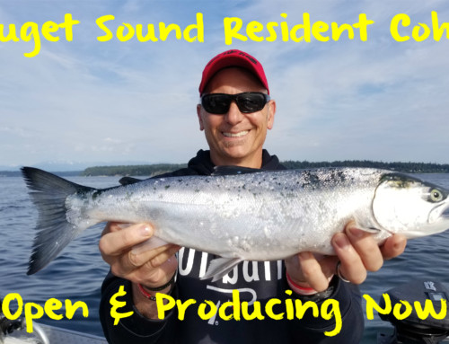 Puget Sound Resident Coho Open & Producing Now
