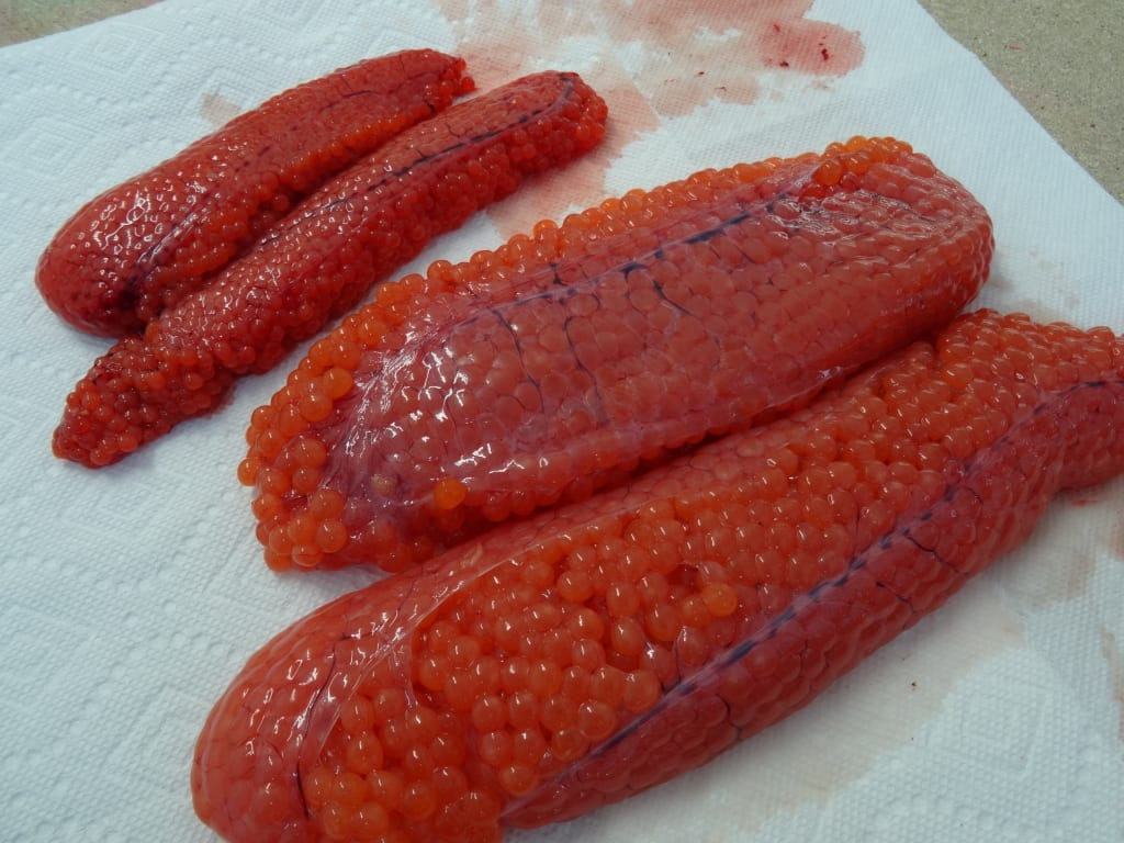 Which Cure Should You Use For Salmon: FireCure or BorX O