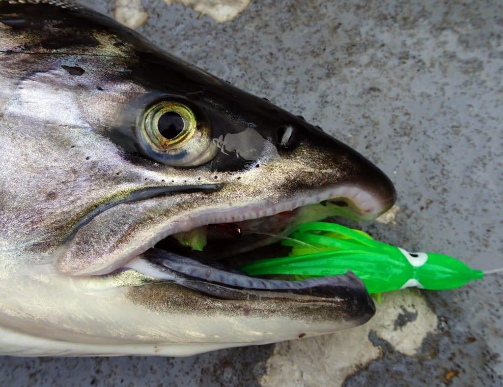 valdezfishing8