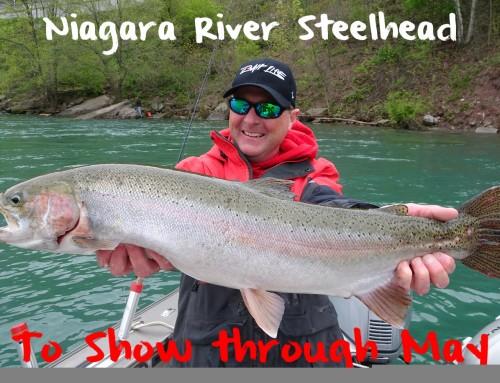 Niagara Steelhead to Show Through May