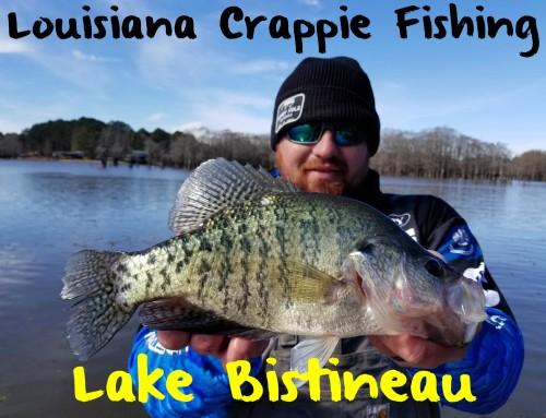 Crappie Fishing Louisiana's Lake Bistineau