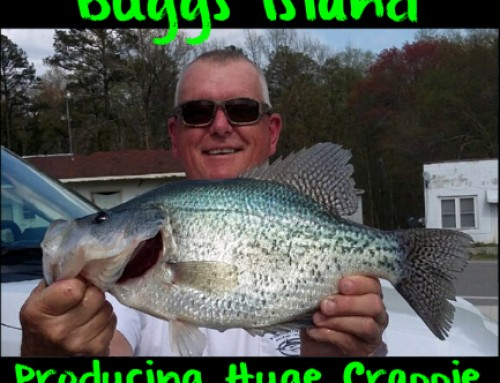 Buggs Island Producing Huge Crappie