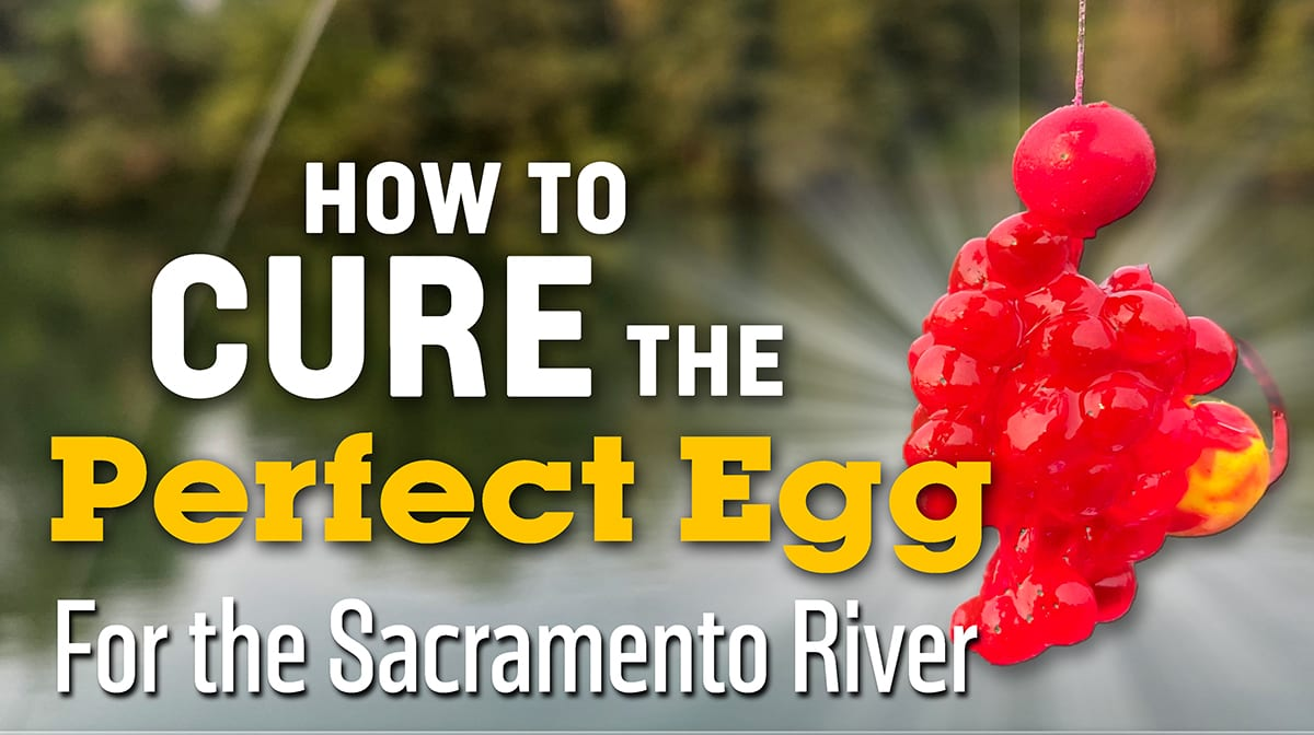 How to cure eggs for Sacramento River